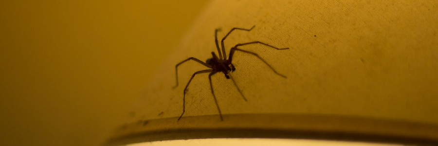 Use stopgap to stop spiders coming inside this autumn for How to stop spiders coming in your home